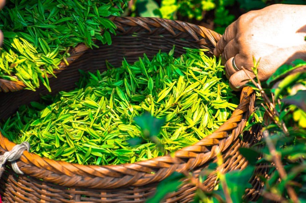 Top 5 des meilleurs thés pour la santé